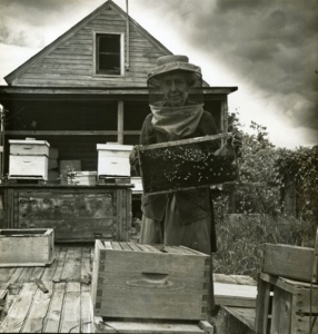 Beekeeping full archive photo