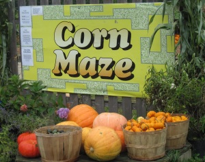 corn maze at Moulton Farm